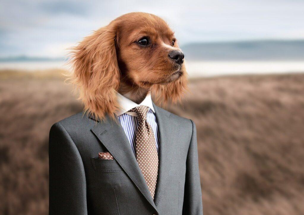dog, puppy, young dog-2467149.jpg