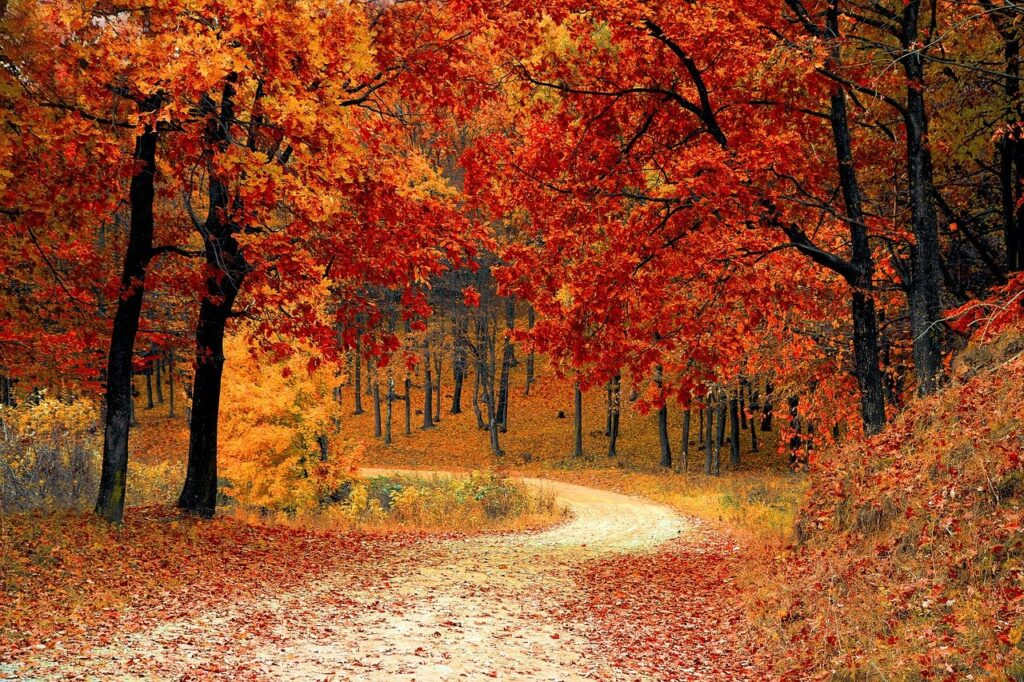 road, forest, fall-1072821.jpg